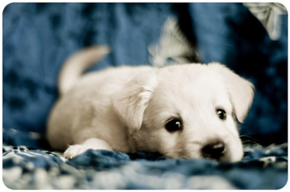 Waiting Puppy