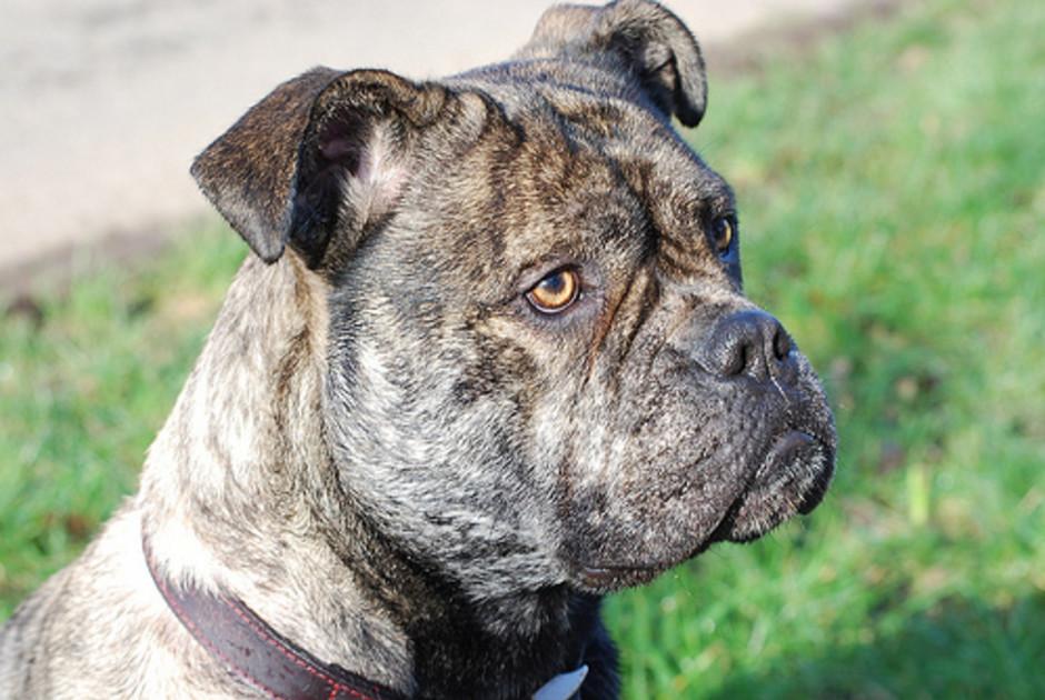 Worried Puppy Eyes
