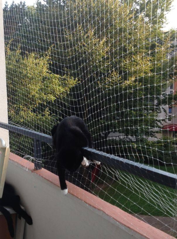 cat-sleeps-hanging-in-the-net