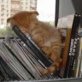 cat-sleeps-in-the-shelf