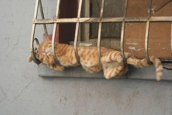 cat-sleeps-in-the-window