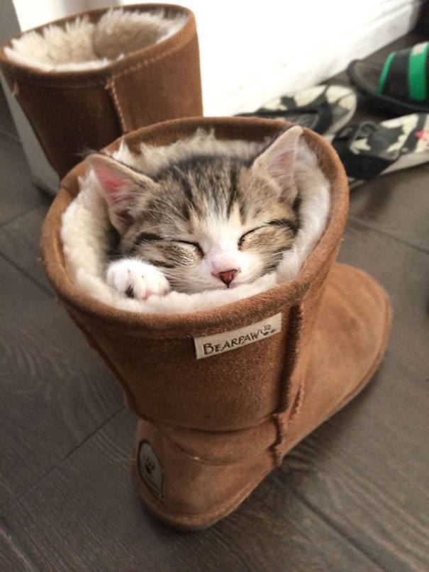 cat-sleeps-inside the boots
