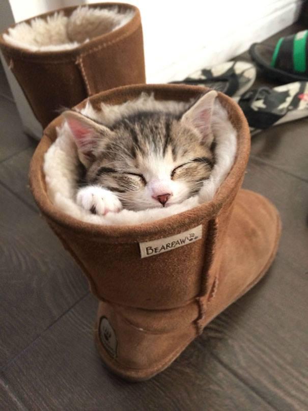 cat-sleeps-inside the boots