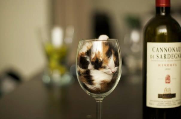 cats-sleeps-inside-a-glass