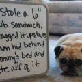 dog-ate-a-sandwich