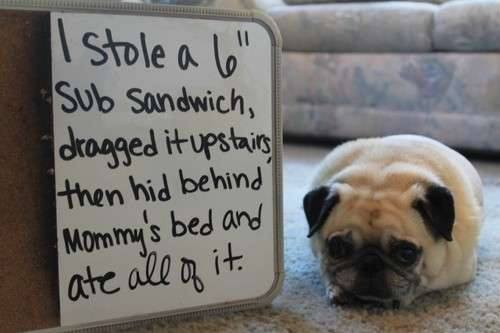 dog-ate-a-sandwich