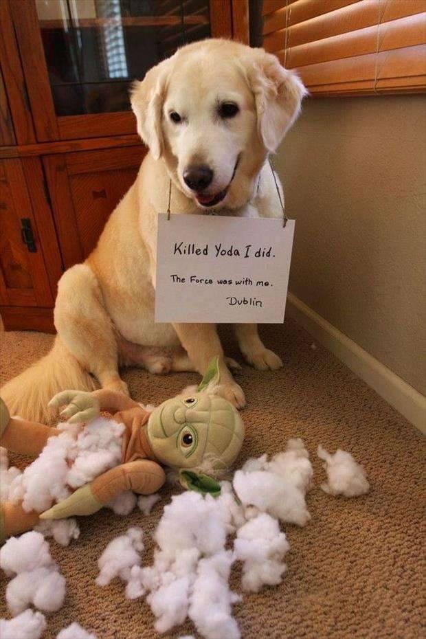 dog-killed-yoda