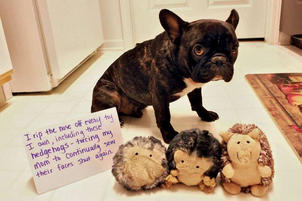 dog-ripped-off-stuffed-toys-nose