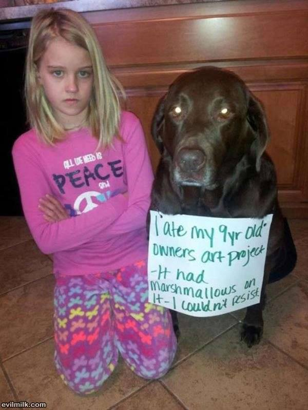 dog-sorry-for-eating-marshmallows