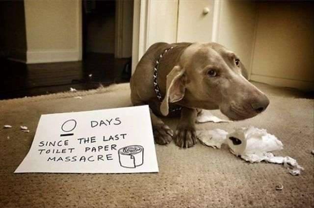 dog-wrecked-tissue-paper