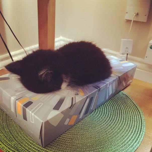 cat-sleeps-in-the-tissue-holder