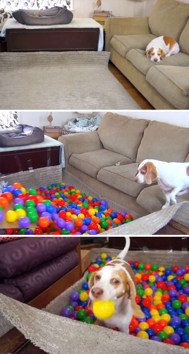 bed-of-balls