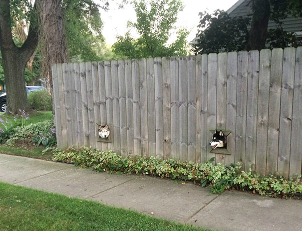 dogs-peeking