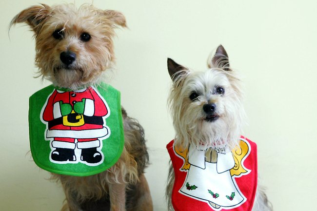 dogs-wearing-christmas-pets