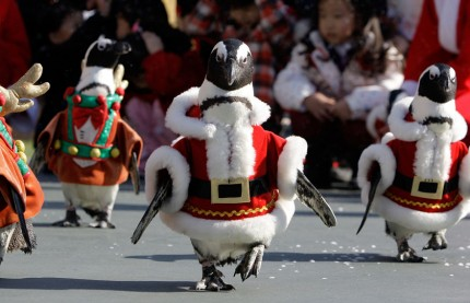 penguin-christmas-march