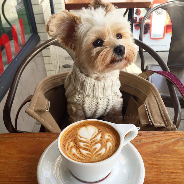 popeye-foodie-and-his-cappuccino