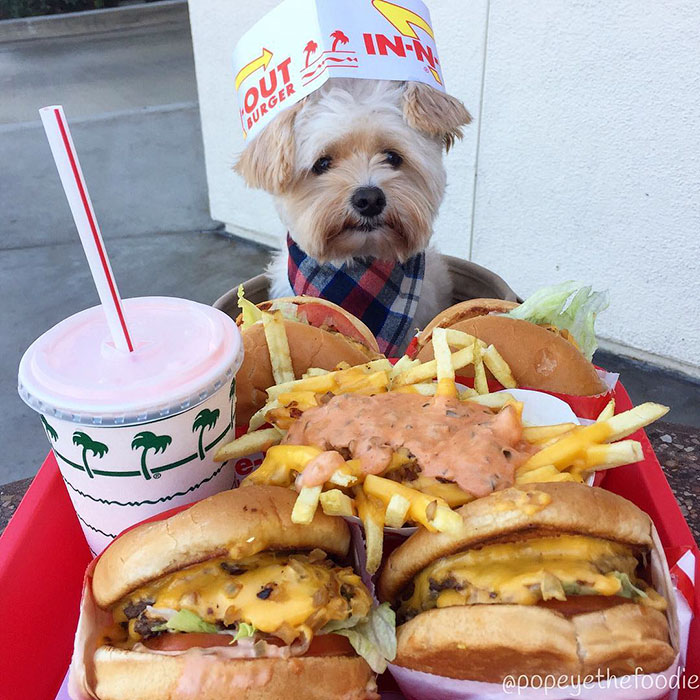 popeye-foodie-at-in-n-out