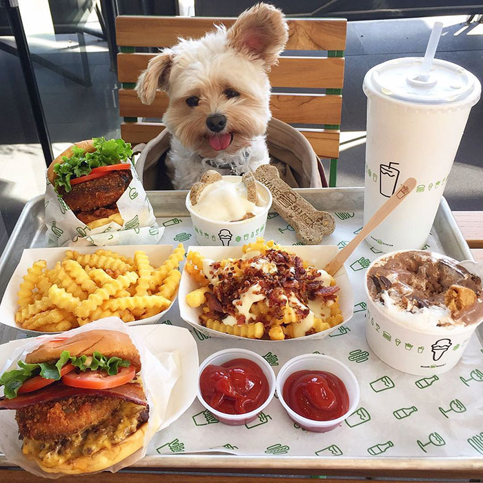 popeye-foodie-at-shake-shack