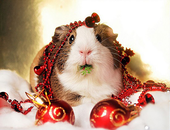 rabbit-eating-christmas-balls