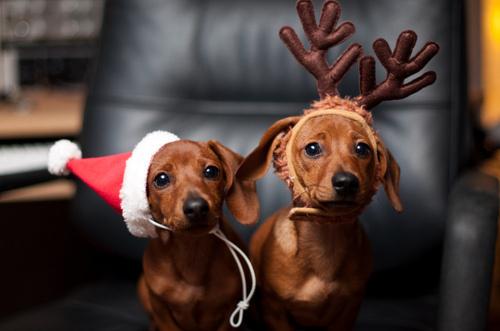 reindeer-pets