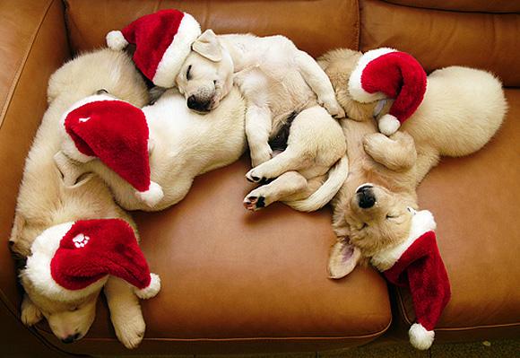 sleeping-santa-babies