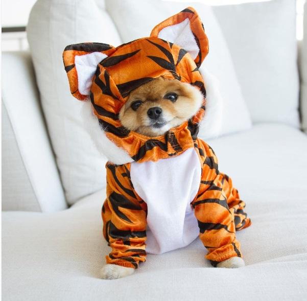 jiff-as-a-tiger