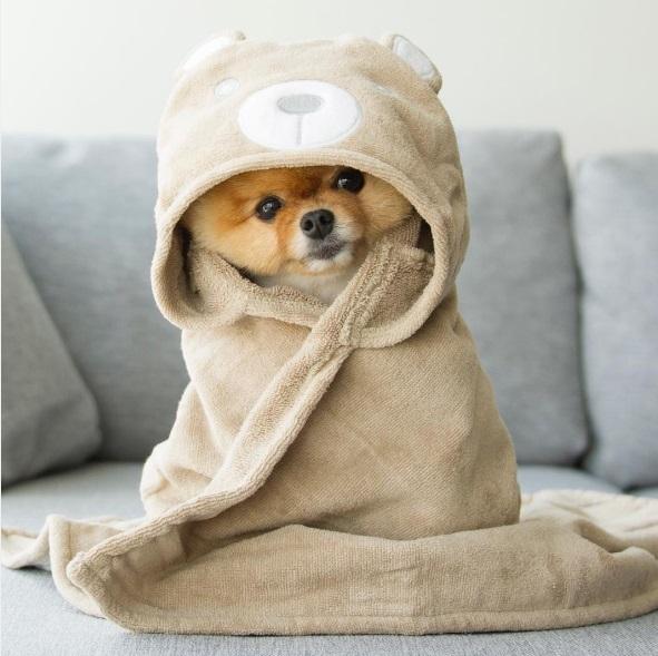 jiff-as-a-cutie-bear