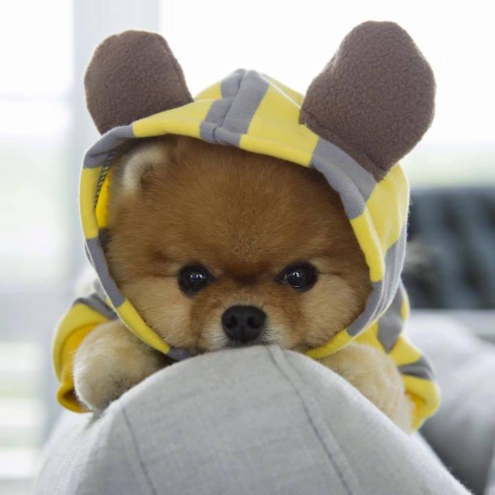jiff-in-bear-hoodie