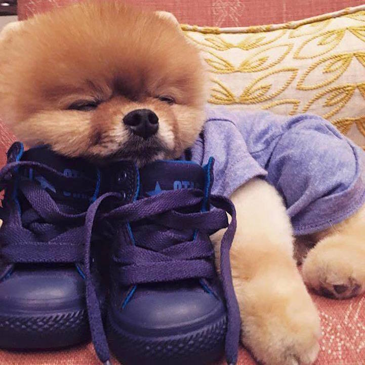 jiff-sleeping-with-his-shoes
