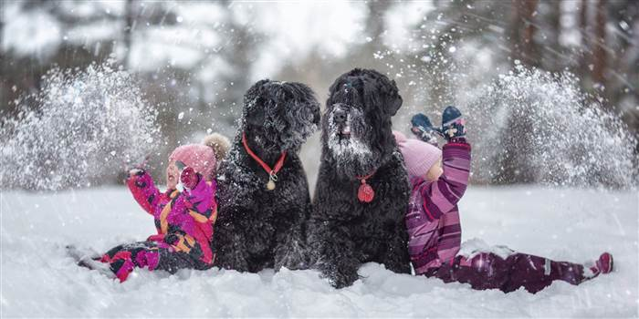 Vasilisa and Varvara with Russian Terriers