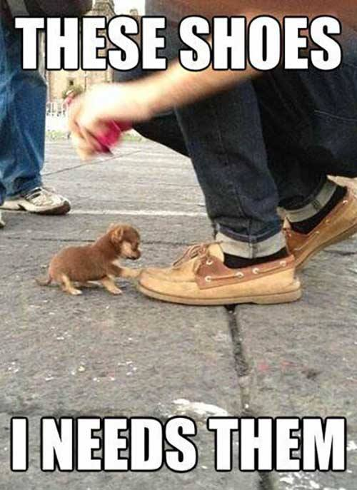 Dog Shoe Lover