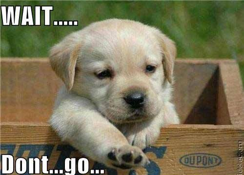 Puppy Says Dont Go