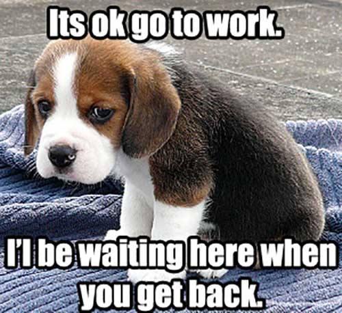 SAd Dog left