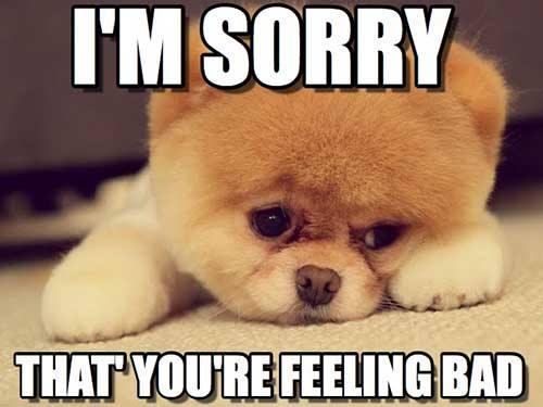 Puppy Feeling Sad