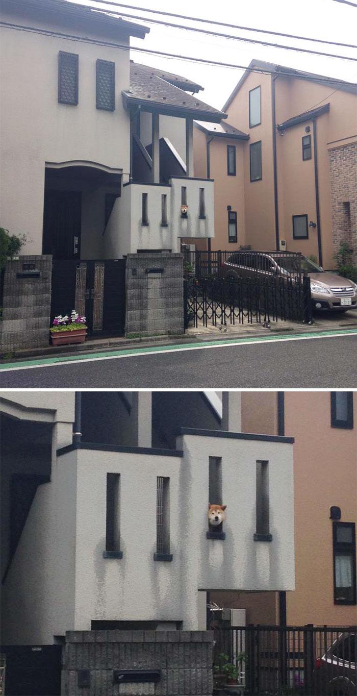 Dog checking out on neighbors