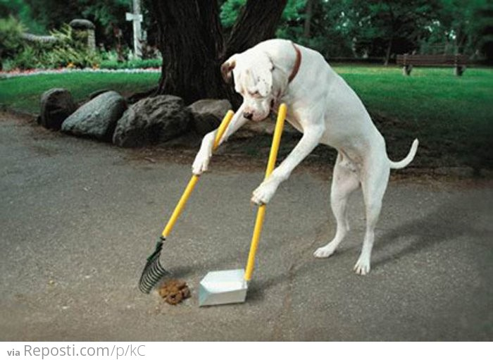 Dog cleaning