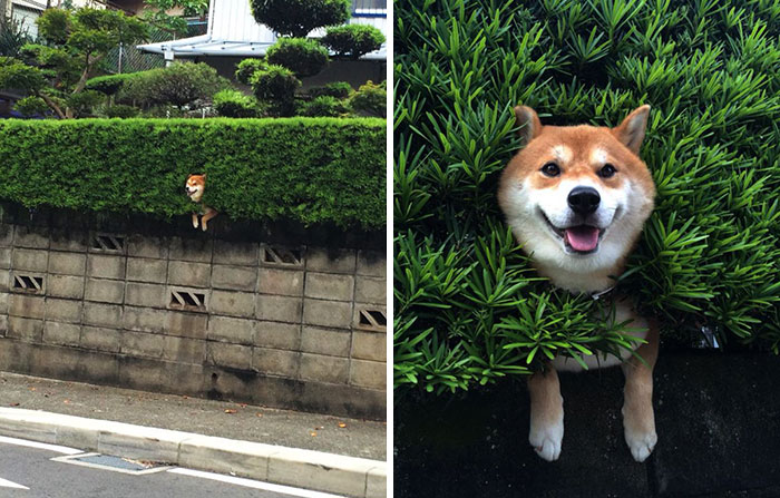 Dog just hanging out trying to camouflage with the grass