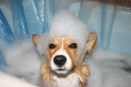 Dog tub time