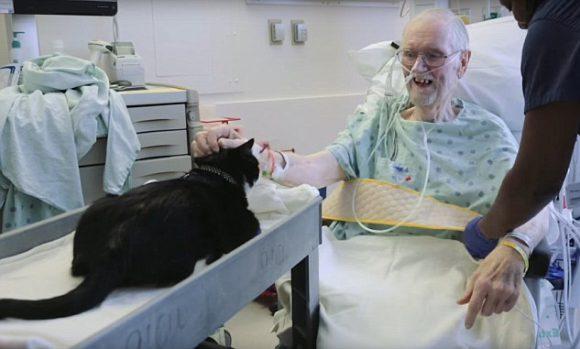 Duke the Cat