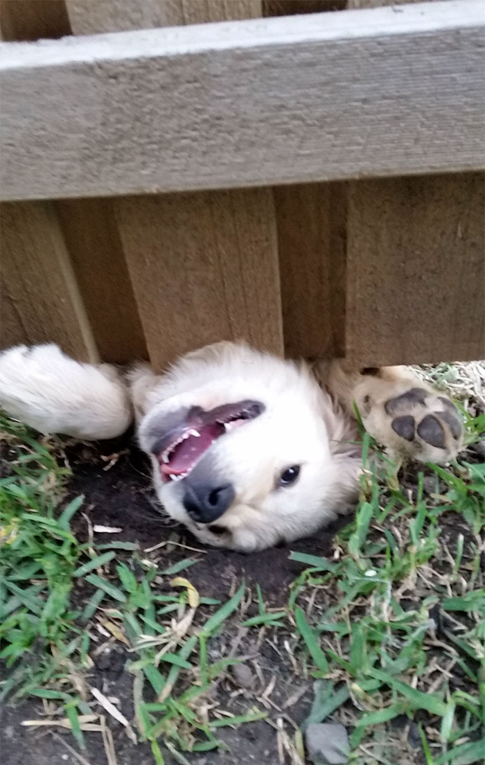 Hello says dog