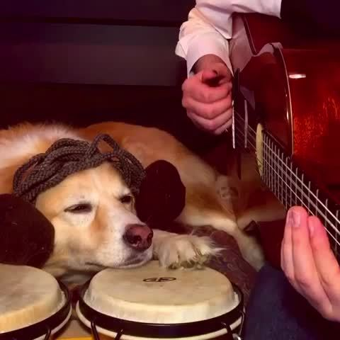 Maple Musically-Talented