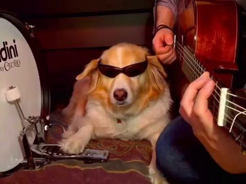 Maple The DOg