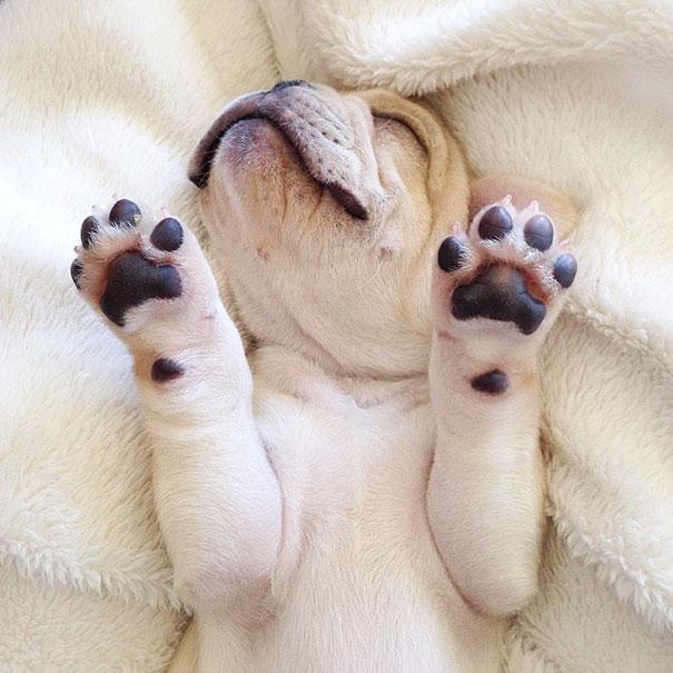 Milo Sleeps