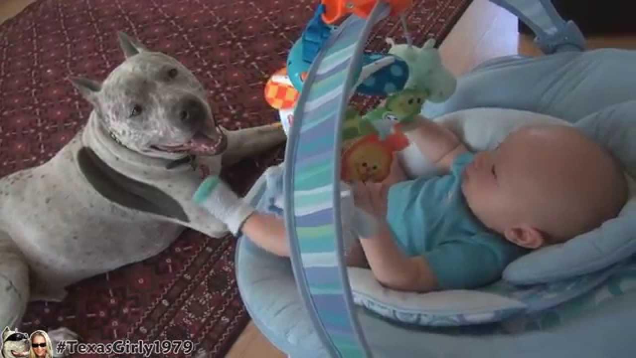 Pit bull nanny dog