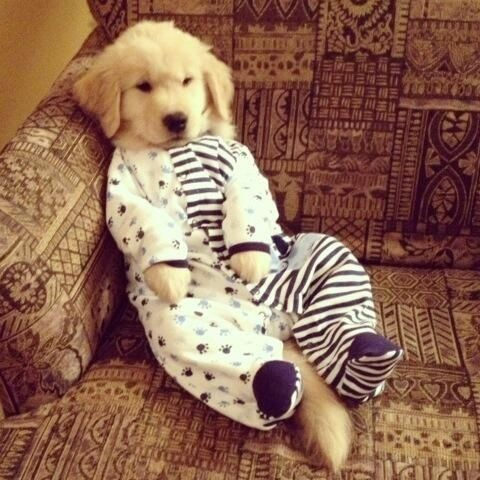 Puppy in Onesie