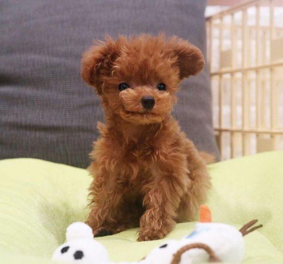 Bibi Shasha looks like teddy bear