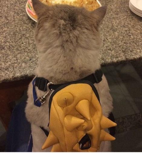 Bone Bone and his yellow spiky backpack