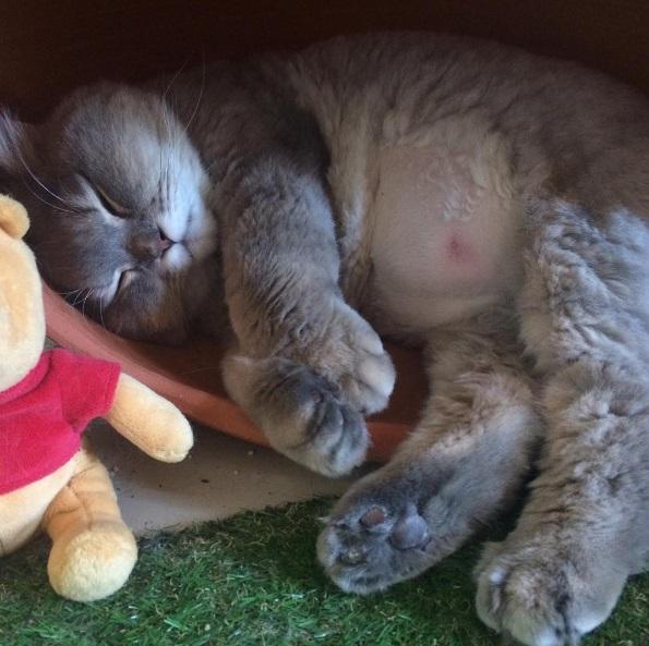 Bone Bone sleeping with pooh