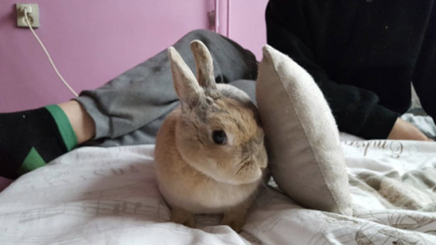 Bunny beside a pillow