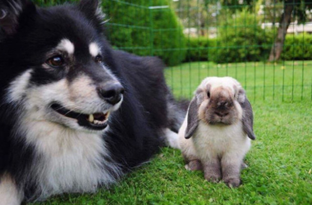 Bunny hanging out with dog